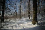 Buczyna - Zima
