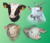 Czytaj więcej: Zmieniły się przepisy dotyczące identyfikacji i rejestracji zwierząt